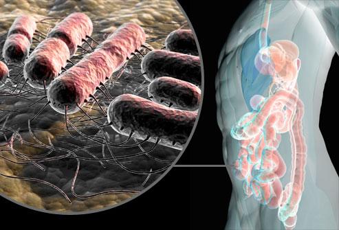 E.-Coli-bakter