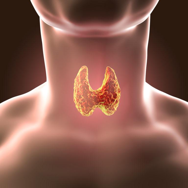 KILPNÄÄRE – kilpnäärmehaigused, kilpnäärme põletik, kilpnäärme alatalitlus, kilpnäärme ületalitus