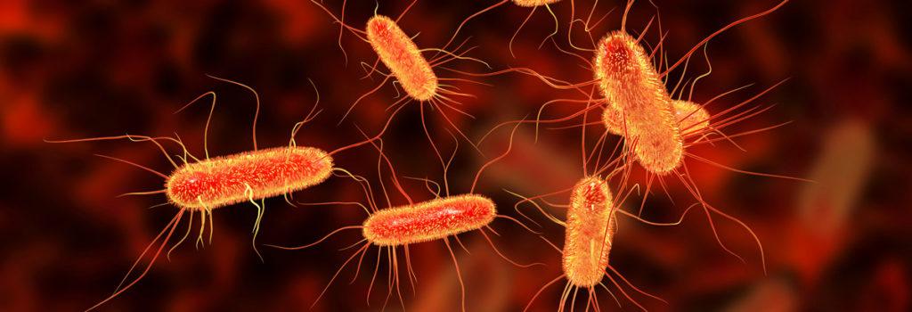 E.coli bakter