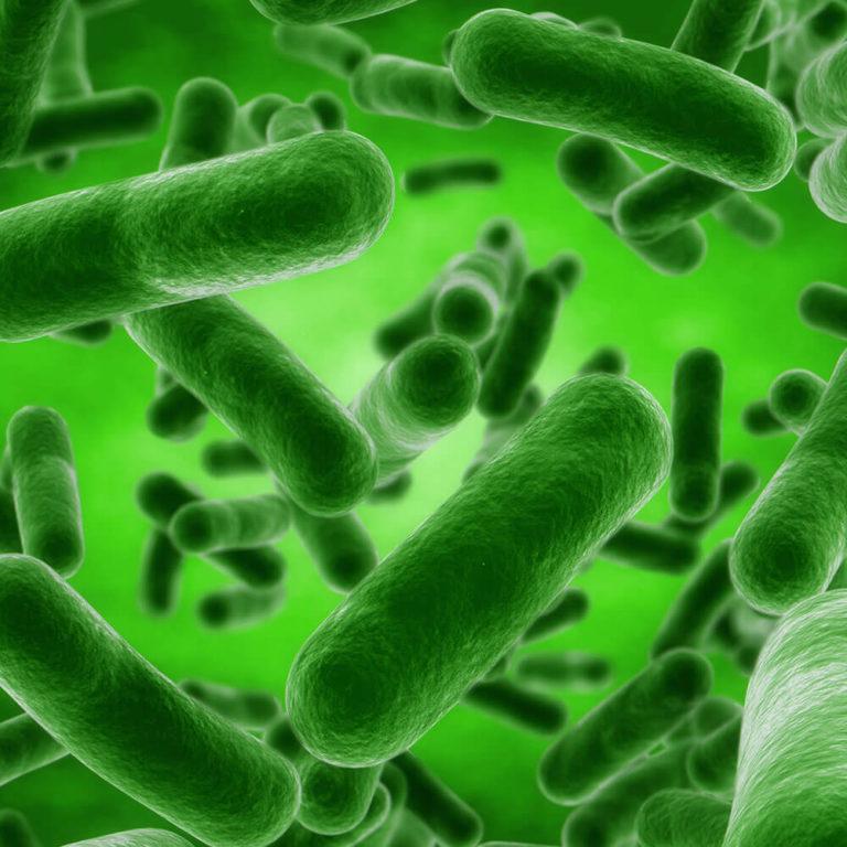 BACILLUS SUBTILIS – Seede- ja immuunsüsteemi toetuseks