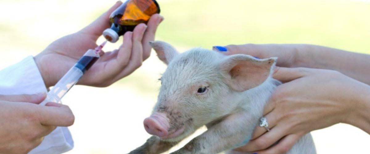 Antibiootikumid loomadelee